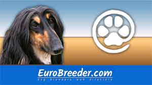 Afghan Hound Breeders and Kennels - EuroBreeder.com
