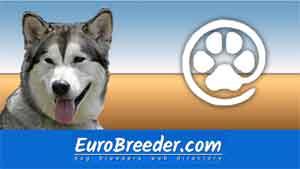 Find Alaskan Malamute breeders - Eurobreeder.com
