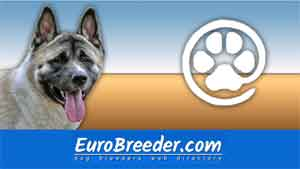 American Akita Breeders and Kennels - EuroBreeder.com