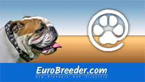 English Bulldog Breeders and Kennels - EuroBreeder.com