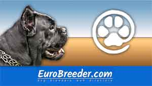 Cane Corso Breeders and Kennels - EuroBreeder.com