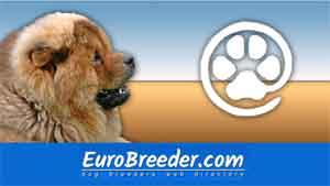 Find Chow Chow breeders - Eurobreeder.com