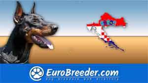 Find a dog breeders in Croatia
