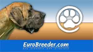 Find Great Dane breeders - Eurobreeder.com