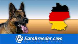 Find a dog breeders in Germany