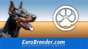 Dobermann Breeders and Kennels - EuroBreeder.com