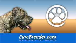 Find a dog breeders - Eurobreeder.com