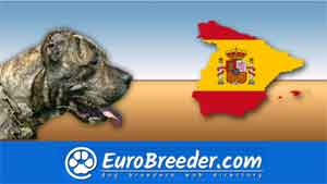 Find a dog breeders in Spain