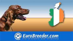 Find a dog breeders - Eurobreeder.com