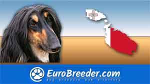 Find a dog breeders in Malta