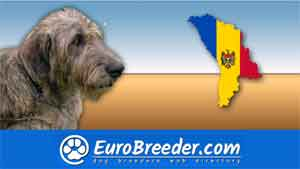 Find a dog breeders in Moldova