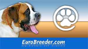 Find St. Bernard breeders - Eurobreeder.com