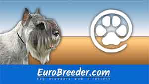 Find Schnauzer breeders - Eurobreeder.com