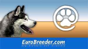 Find Siberian Husky breeders - Eurobreeder.com
