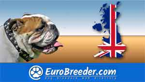 Dog Breeders in Wales