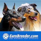 Dog Breeders in Europe, Americas and Australia