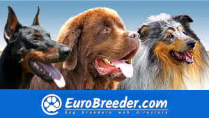 Dog Breeders and Kennels - EuroBreeder.com