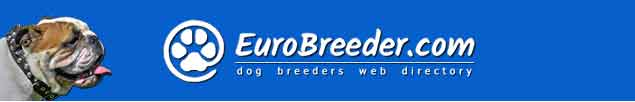 English Bulldog Breeders - EuroBreeder.com