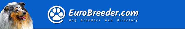Collie Rough Breeders - EuroBreeder.com
