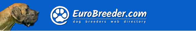 Great Dane Dog Breeders - EuroBreeder.com