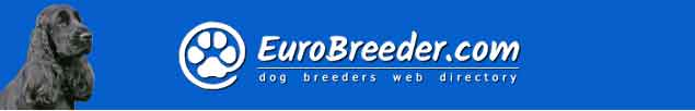 English Cocker Spaniel Dog Breeders - EuroBreeder.com