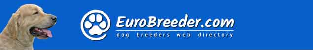 Golden Retriever Dog Breeders - EuroBreeder.com
