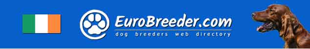 Ireland Dog Breeders - EuroBreeder.com