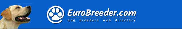 Labrador Retriever Dog Breeders - EuroBreeder.com