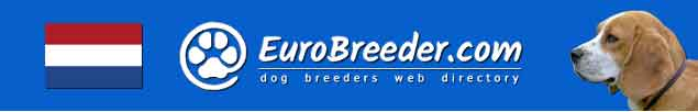 Netherlands Dog Breeders - EuroBreeder.com
