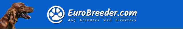Irish Red Setter Breeders - EuroBreeder.com