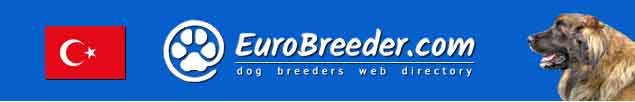 Turkey Dog Breeders - EuroBreeder.com