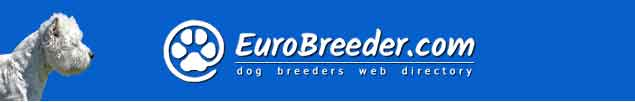 West Highland White Terrier Dog Breeders - EuroBreeder.com