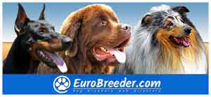 Find a dog breeders in Europe