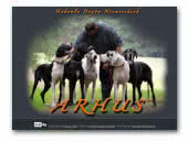 Arhus Great Danes Kennel