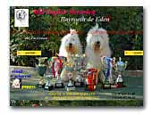 Bayroeth de Eden Old English Sheepdog
