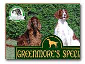 Greenmore Special Irish Red and White Setter