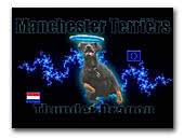Manchester Terrier Kennel Thunderdragon