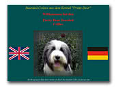 Bearded Collie Kennel Pretty-Bear