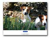 Ramnous Jack Russell Terriers