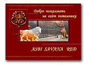Asbi Savana Red kennel Rhodesian Ridgeback