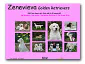 Zenevieva Golden Retrievers