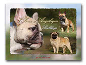 de l'Ame d'Angélique French Bulldog Kennel
