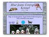 Blue Jeans Forever English Setters