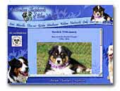 of Blue Valley Australian Shepherd's