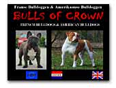 Bulls of Crown French Bulldogs and American Bulldogs