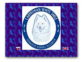 Carpathian white smile - Samoyed kennel