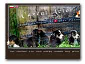 Caveat Actor - Greater Swiss Mountain Dog