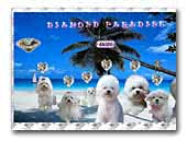 Diamond Paradise FCI
