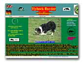 Hybeck Border Collies