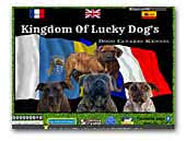 KIngdom of lucky dogs